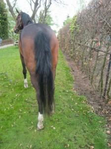 Paardmetextensionskopie